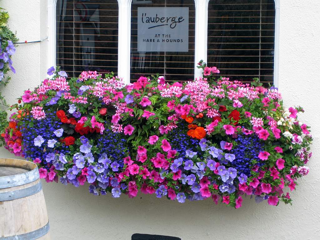 Majorplants Ltd Window Boxes Gallery Image 001
